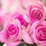 Kwiatowa dekoracja nawet na 104 tygodnie